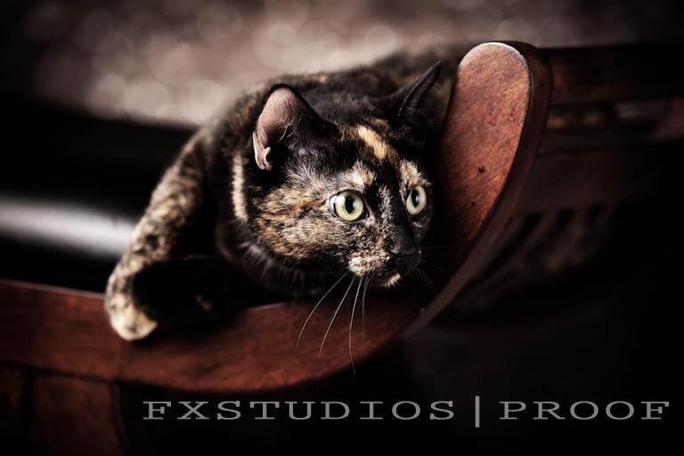 0027_Leach,Amanda_Lily-Cat_2009